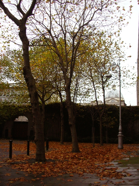 Trees and Leaves on Kildare Street
